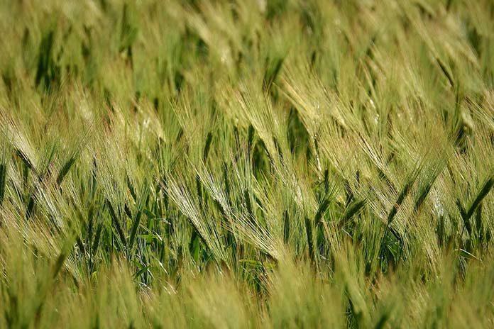 Jak wybrać najlepsze środki ochrony roślin?